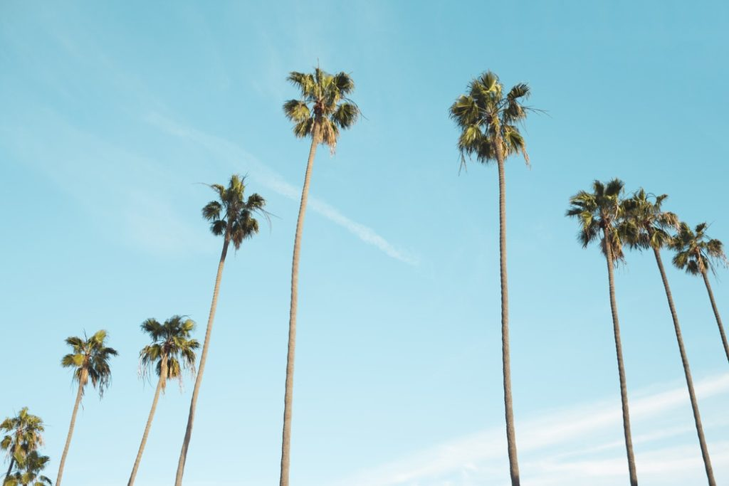 Snippets of My Los Angeles Trip